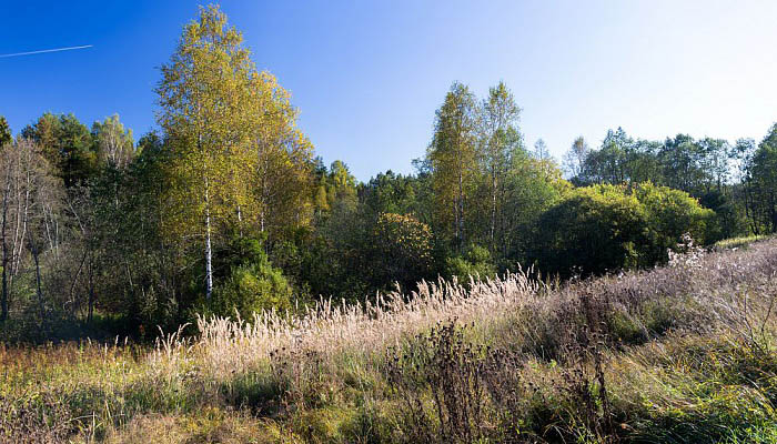 Земельный участок 18-20 соток по Ярославскому шоссе