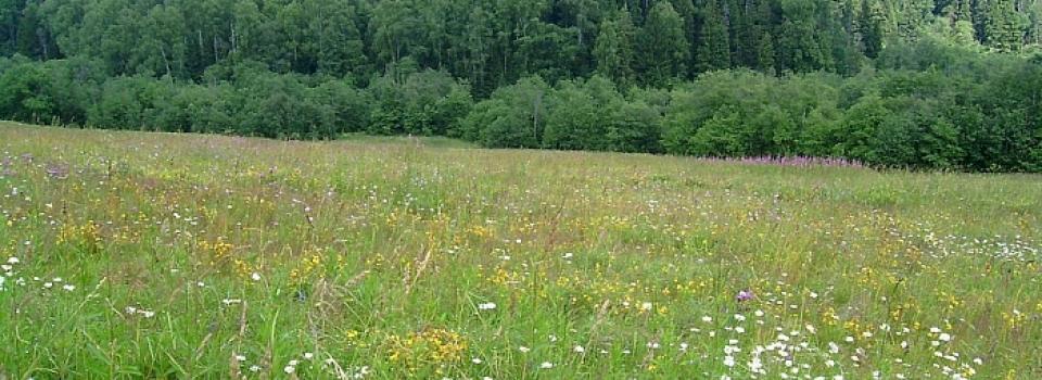 Земельный участок 16-18 соток Зеленцино