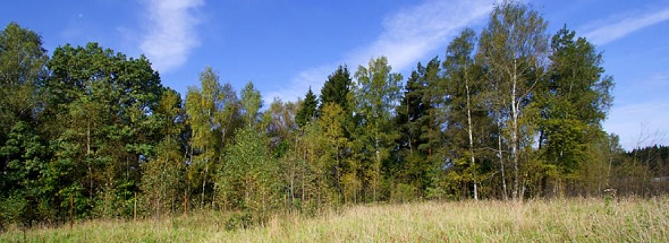 Земельный участок 14-16 соток по Щелковскому шоссе