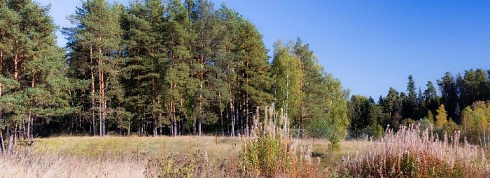 Земельный участок 12-14 соток по Ярославскому шоссе