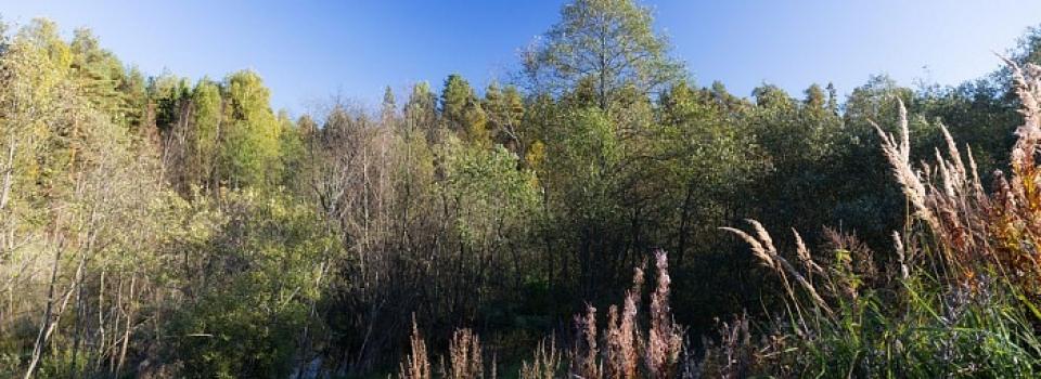 Земельный участок от 22 до 24 соток по Ярославскому шоссе
