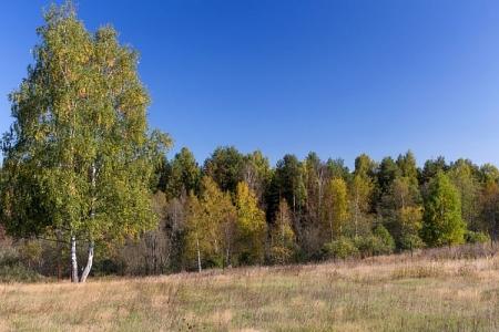 Земельный участок 16-18 соток по Ярославскому шоссе