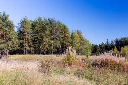 Участок возле леса