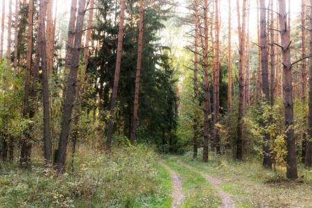 Дачный участок возле леса в Зеленцино