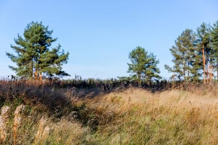 Участок у леса в Зеленцино