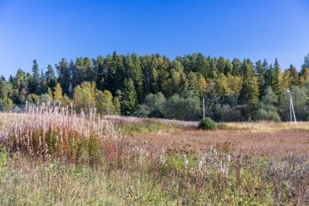 Земельный участок с домом у леса по Ярославскому шоссе