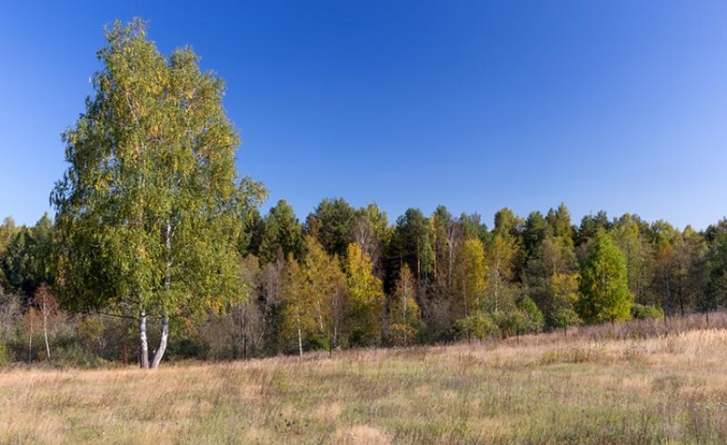 Земельный участок у леса
