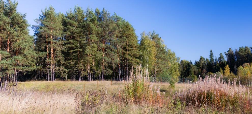 Счастливый участок у леса в Зеленцино